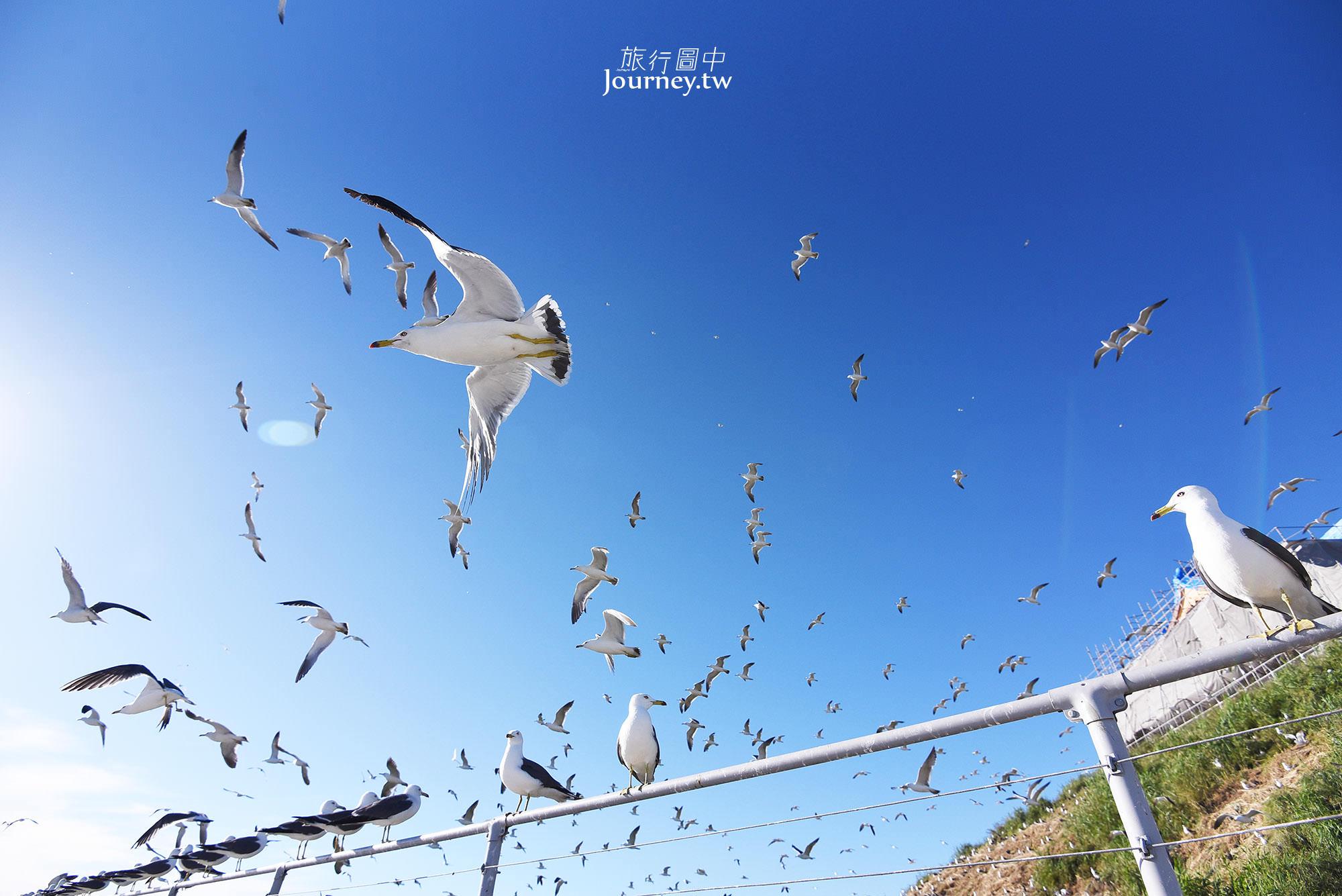 日本,東北,景點,青森,八戶,海鷗,蕪島,蕪嶋神社