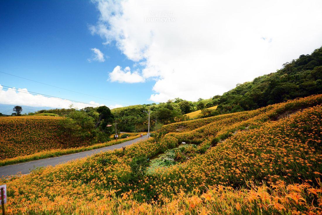 花蓮,玉里,赤柯山,金針花季