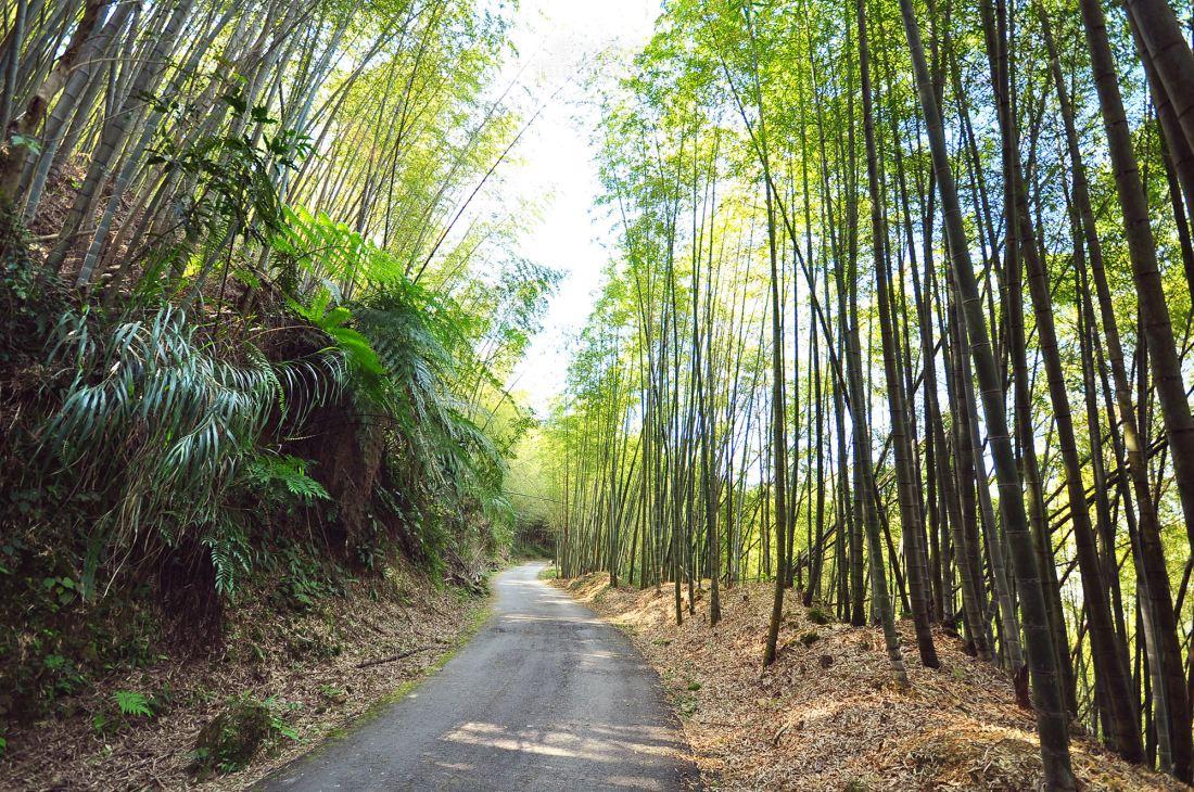 嘉義,梅山,瑞里綠色隧道