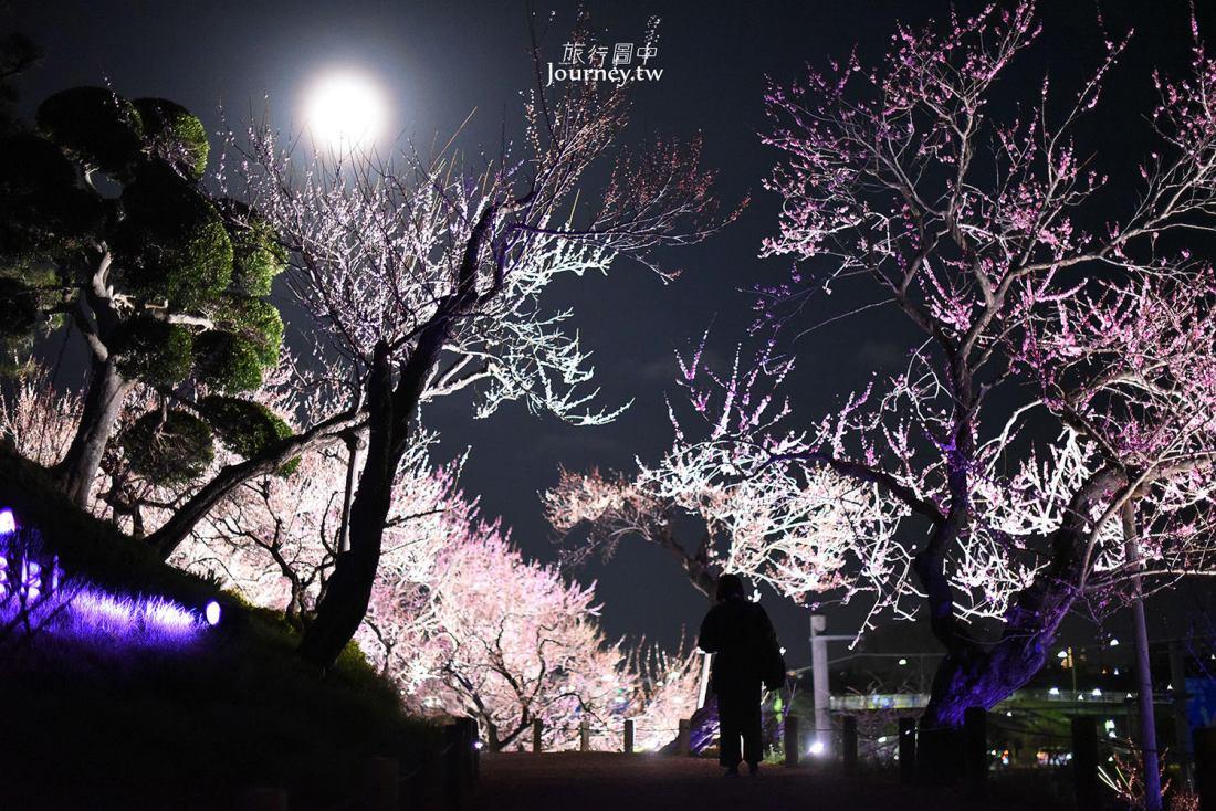 茨城,水戶,偕樂園,夜梅祭,光の散步道