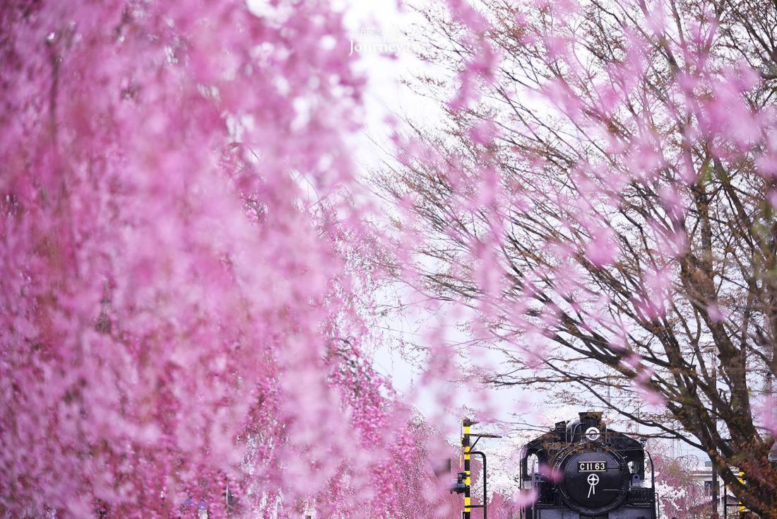 福島,喜多方,日中線紀念自行車步行道,垂櫻