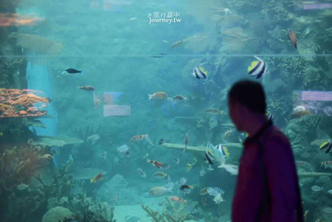 澎湖,白沙,澎湖水族館,澎湖景點,白沙景點,水族館