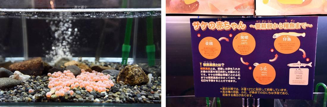 北海道,北海道景點,札幌景點,札幌自由行,千歲水族館