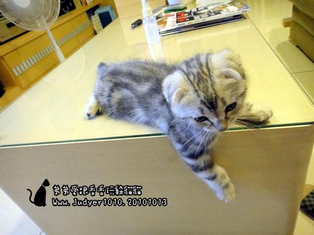 貓咪札記:弟弟愛跟香香玩躲貓貓~