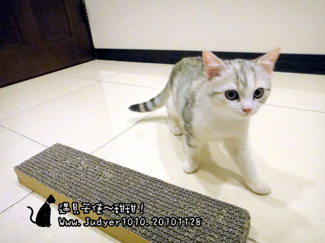 貓咪札記:遇見天使~甜甜喵!