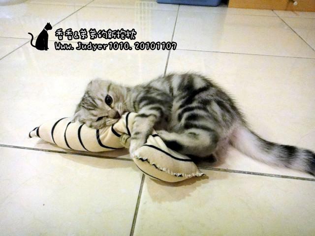 貓咪札記:我做給香香&弟弟的新抱枕~