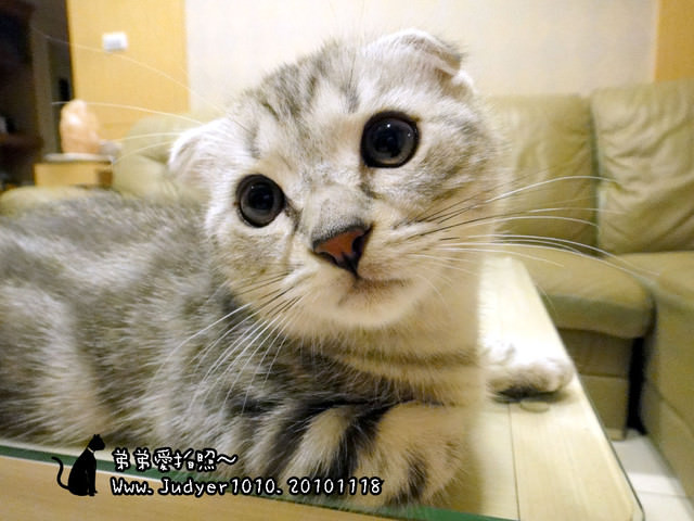 貓咪札記:弟弟愛拍照~