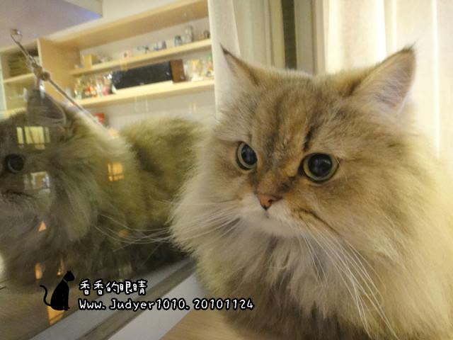 貓咪札記:香香的眼睛~