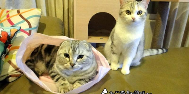 貓咪札記:3喵劇場~塑膠袋的誘惑!