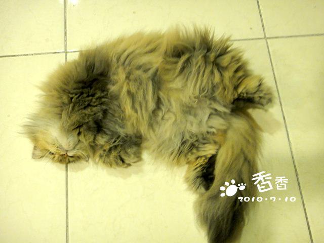 貓咪札記:放暑假~香香剃毛去!