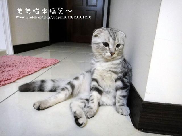 貓咪札記:弟弟來搞笑