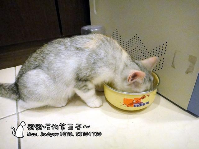 貓咪札記:甜甜喵的第三天~