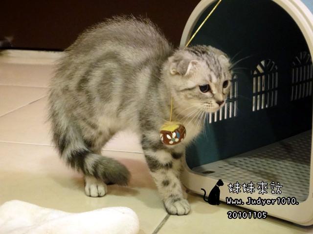貓咪札記:妹妹來訪~
