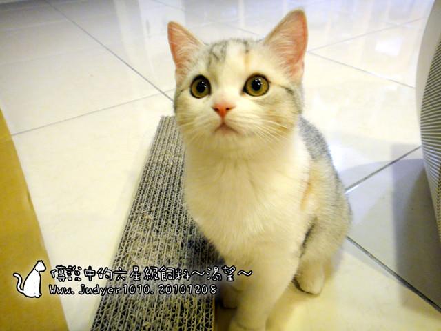 貓咪札記:傳說中的六星級飼料~加拿大渴望~