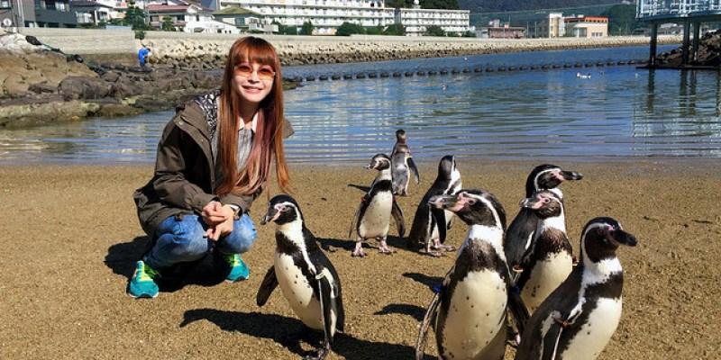 【日本長崎】長崎企鵝水族館Nagasaki Penguin Aquarium,天啊!這樣零距離跟企鵝接觸,我是在作夢嗎?
