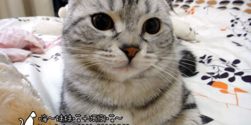 貓咪札記:妹妹+阿冏跟弟弟+甜甜,到底像不像 ~