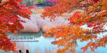 【韓國賞楓】奧林匹克公園,銀杏樹林蔭道、88湖、孤單樹,秋天的景色美炸了,你千萬不能錯過啊!