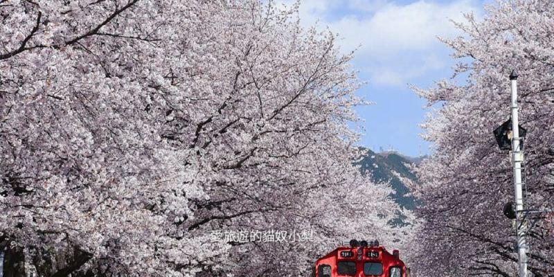 【韓國釜山鎮海賞櫻】鎮海軍港節→余佐川櫻花道→慶和車站,一生一定要去看一次!