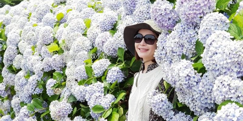 濟州島西歸浦景點\安德面繡球花拍照點!