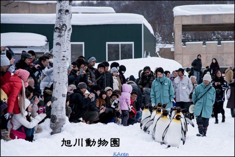 [2013.03 日本。北海道] 讓人卡娃伊笑容滿臉的旭川動物園(圖多)