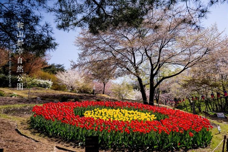 [Seoul。櫻花] 鞍山都市自然公園 서울 안산도시자연공원