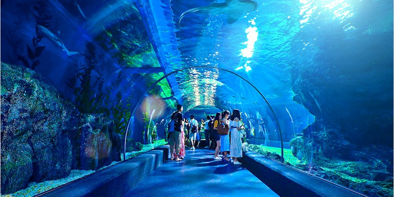 泰國曼谷自由行 | 暹羅海洋世界(BTS Siam站)-泰國最大水族館,充滿驚喜超乎想像的好玩,相當適合親子同遊趣哦!(內有影片分享)