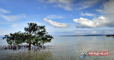 宿霧薄荷島跳島浮潛   薄荷島包船出海、潛水費用、注意事項,包船跳島尋找海豚、海龜蹤跡!