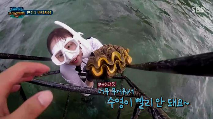 Image result for law of the jungle giant clam