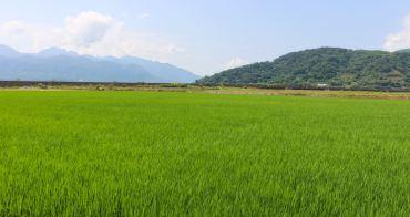 小農聯合新品牌光合稻子 玉里好米這邊買