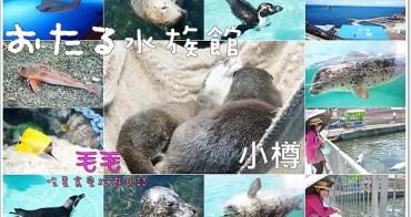 北海道自由行 》小樽水族館。購票、交通攻略,不能錯過的超可愛海豹、企鵝,好玩好看風景也很美♥5天4夜行程規畫景點推薦