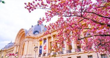 巴黎賞櫻》�皇宮Petit Palais,滿開粉嫩櫻花,空無一人的巴黎櫻花�地