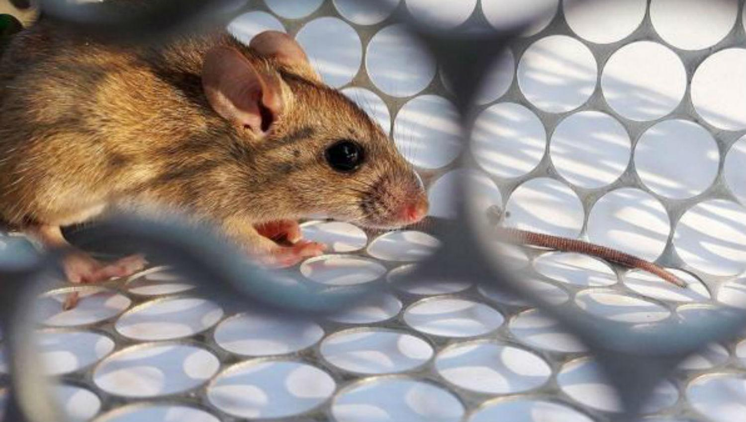 The eighth hantavirus case in Buenos Aires: Tucuman continues to ...