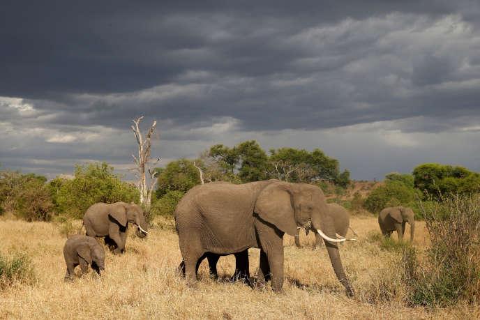 Elephants in Singita Grumeti Reserve, Tanzania, October 2018.