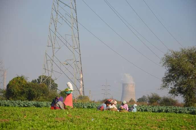 Plantations near Nagpur, central India, in January.
