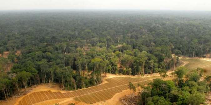 Le secteur du bois est un pilier central de l'économie du Gabon, pays recouvert à 80% de forêts.