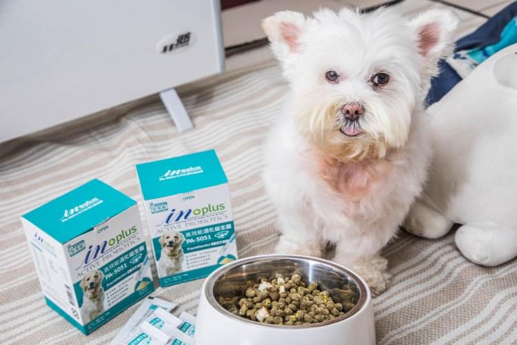 [寵物保健] 寵物益生菌推薦,狗狗日常腸胃道保健品,IN-Plus 腸胃保健-PA-5051高效能活化益生菌