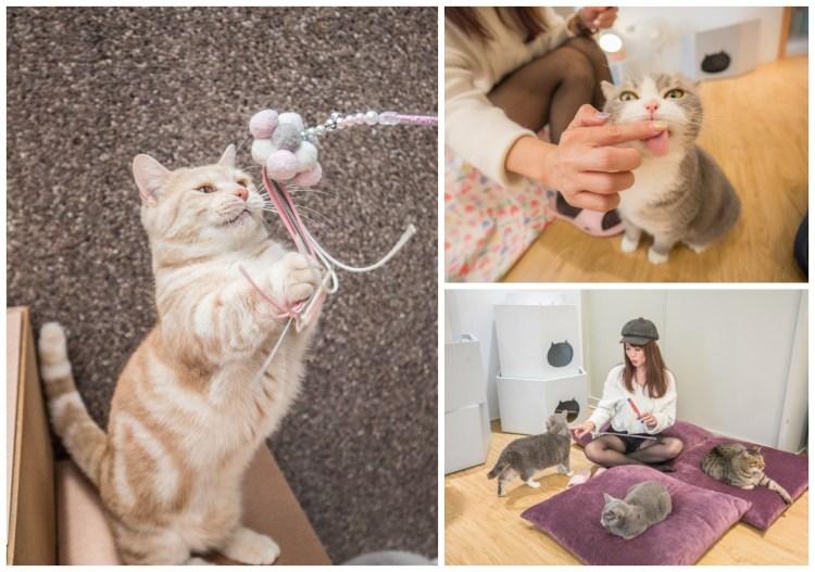 [宜蘭景點]貓的生活提案/有貓就給讚!可愛慘了!來這瘋狂吸貓、擼貓、摸貓,貓奴天堂無誤!