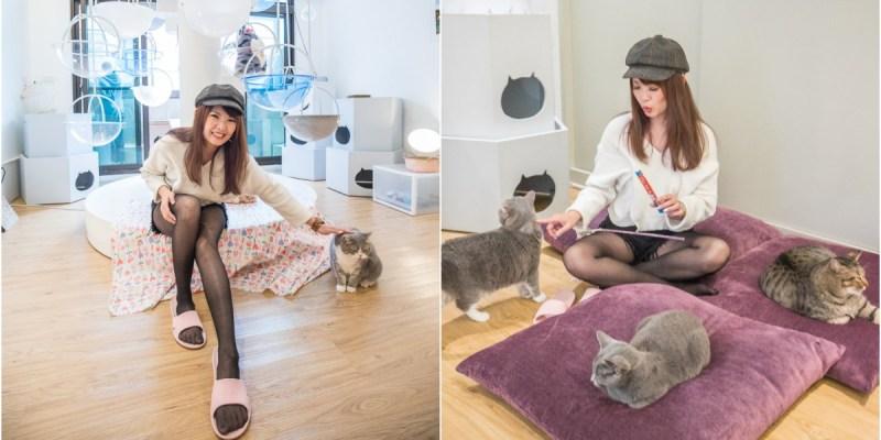 宜蘭景點》貓的生活提案 有貓就給讚!可愛慘了!來這瘋狂吸貓、擼貓、摸貓,貓奴天堂無誤!
