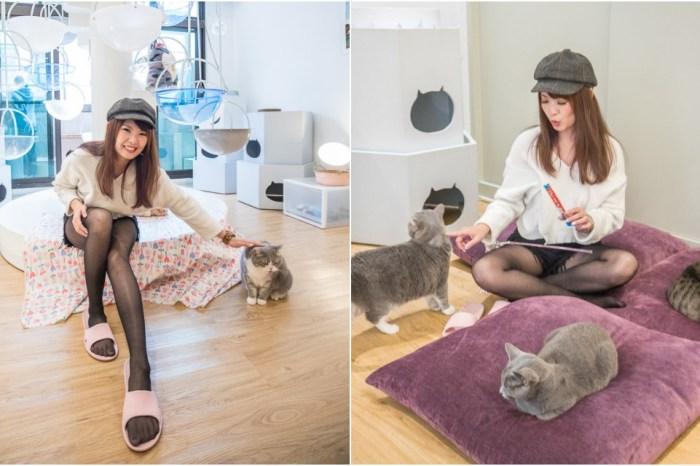 宜蘭景點》貓的生活提案|有貓就給讚!可愛慘了!來這瘋狂吸貓、擼貓、摸貓,貓奴天堂無誤!