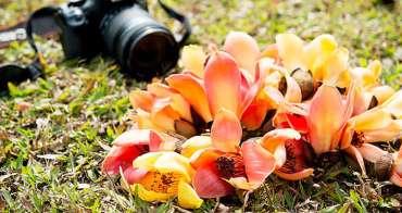 【台南木棉花季懶人包】2020全台南木棉花必拍景點|全球15條最美花海之一在台南~2020台南木棉花懶人包
