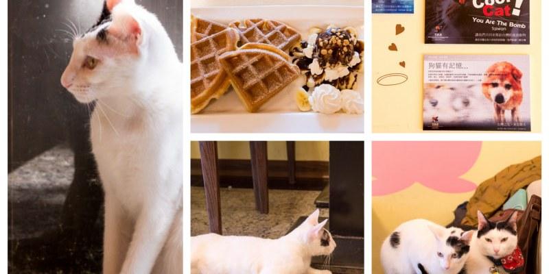 三重》野喵中途咖啡 - 讓可愛的萌貓咪與你共度下午茶時光