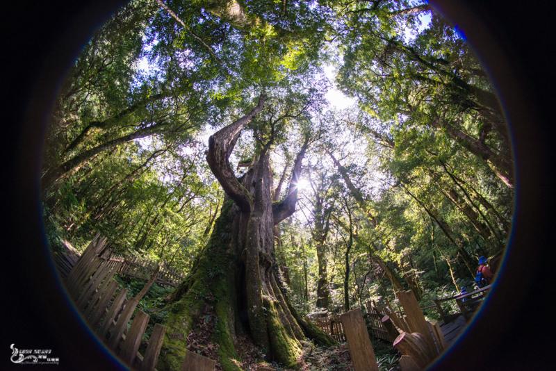 新竹景點推薦》司馬庫斯Qalang Smangus. 下篇 – 上帝的部落 神木群寧靜之旅