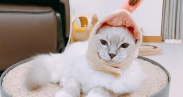 【Ragdoll 布偶貓】山貓紋手套色 小王子 Felix 來到新家啦