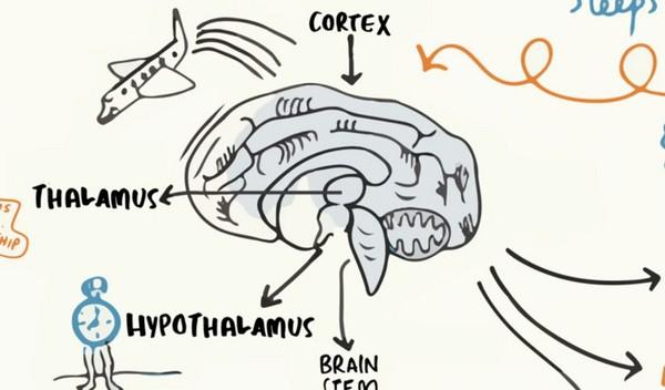 「寝不足を甘く見るな!」 神経学者が語る、あなたが毎日ぐっすり眠るべき3つの理由