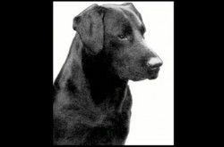 犬が飼主に言いたいのは多分こんなこと 詩人が犬の目線で書いた2篇の短い詩