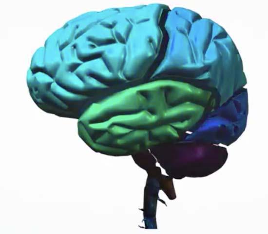 「人間は脳の10%しか使っていない」はウソ? 実際はこんな感じ