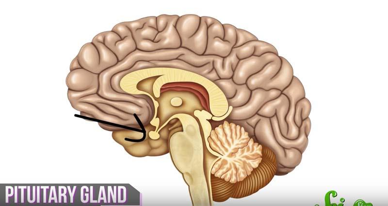 頭を柔軟に保つ秘訣とは 10代の若々しい脳の働きを科学的に解説