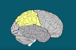 ポルノを見ている女性の脳を調べた結果わかったこと 性医学学会誌の報告より