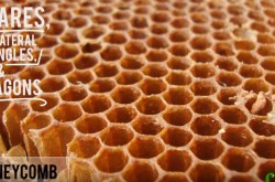 ハチの巣はなぜ六角形なの? 合理的な形をつくる小さくて優秀な建築家たち
