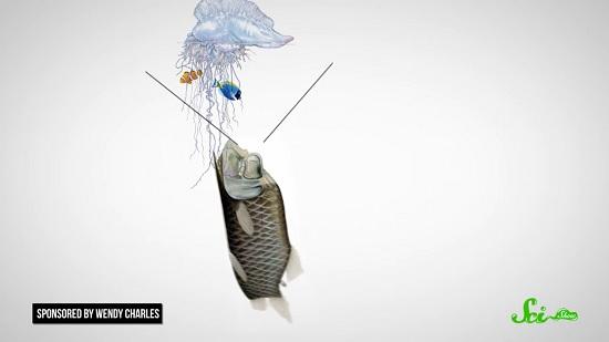 奇妙な深海魚「デメニギス」 常識はずれの姿に隠された秘密 ...